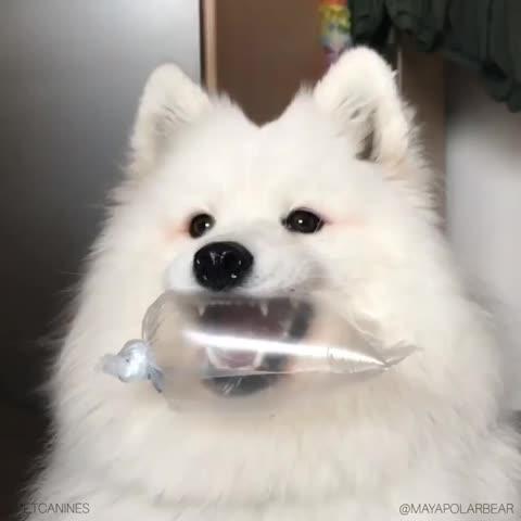 dog, wphj1e8ya2m11 GIFs