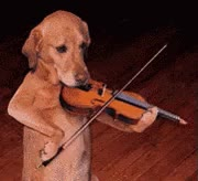 Watch and share Tiny Violin GIFs on Gfycat
