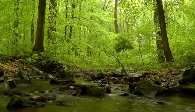 Watch and share 60 Minutes Of Woodland Ambiance (Nature Sounds Series #4) Trickling Stream & Birds Sounds GIFs on Gfycat