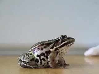 Watch and share Frog Jumps. Slow Motion! GIFs on Gfycat