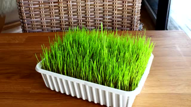Watch and share Time Lapse GIFs and Cat Grass GIFs by moragor on Gfycat