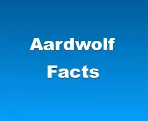 Watch and share Aardwolf Fun Facts GIFs and Amazing Wolf Facts GIFs on Gfycat