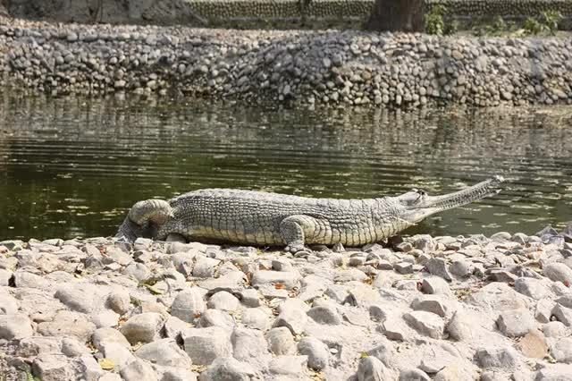 Watch this crocodile GIF on Gfycat. Discover more crocodile GIFs on Gfycat