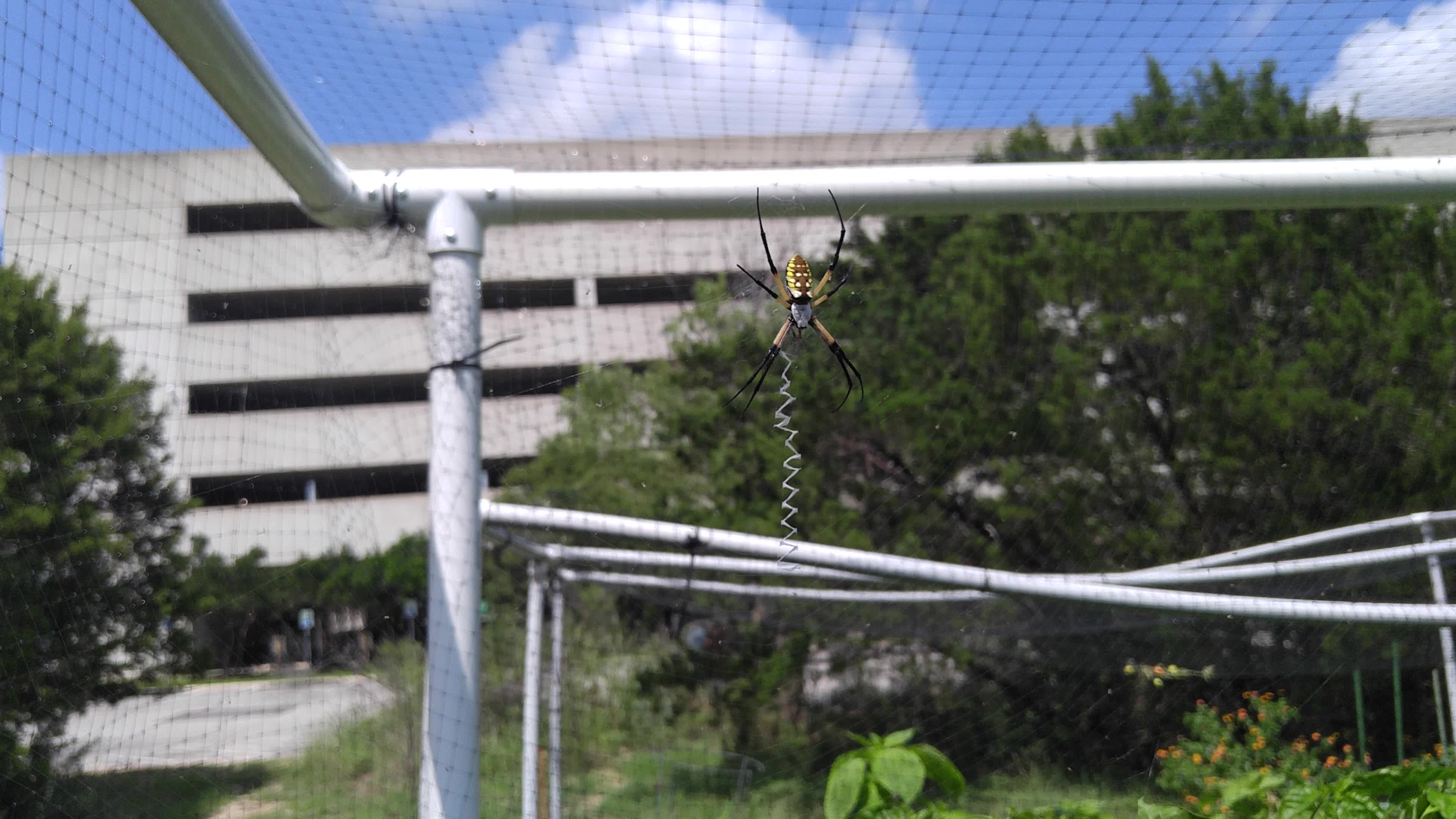 insects, outdoors, spider, spiders, Feeding spiderbro GIFs