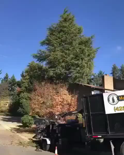 ⠀ Falling tree leads to pollen bomb GIFs