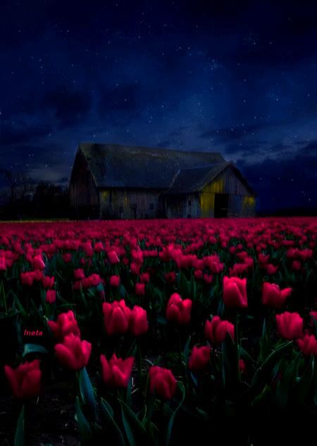 nature, sky, stars, tulips, ezgif-3-c036a37fa3 GIFs