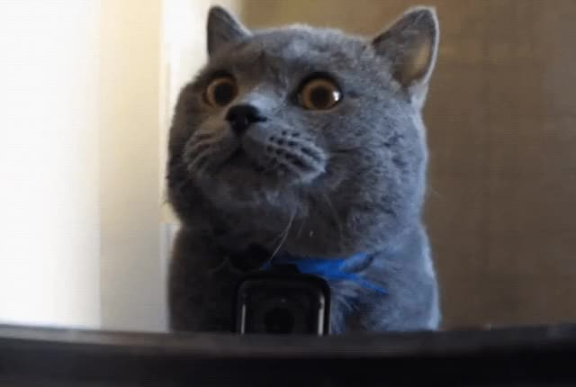 Watch this cat GIF by The GIF Smith (@sannahparker) on Gfycat. Discover more aaron's animals, awww, cat, cute, go pro, mirror, reflection GIFs on Gfycat