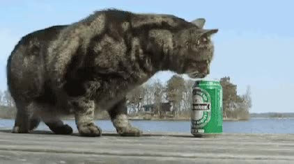 Watch this alcohol GIF on Gfycat. Discover more alcohol, beer, cat, cats, good, luck GIFs on Gfycat