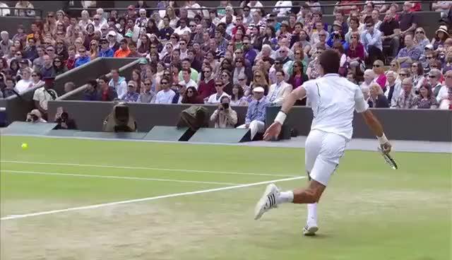 Watch and share Djokovic GIFs on Gfycat