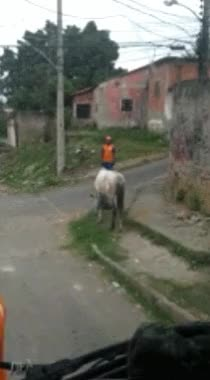 Watch and share Donkey GIFs by /r/Dashcamgifs on Gfycat