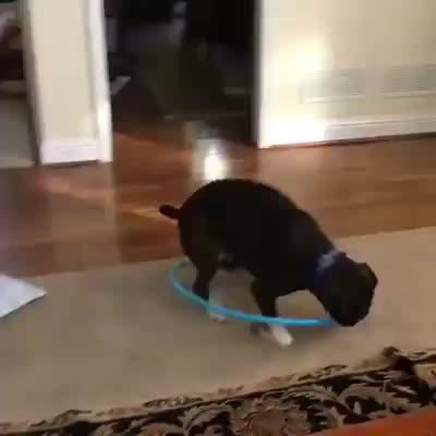 Watch and share Hula Hoop GIFs and Dog GIFs on Gfycat