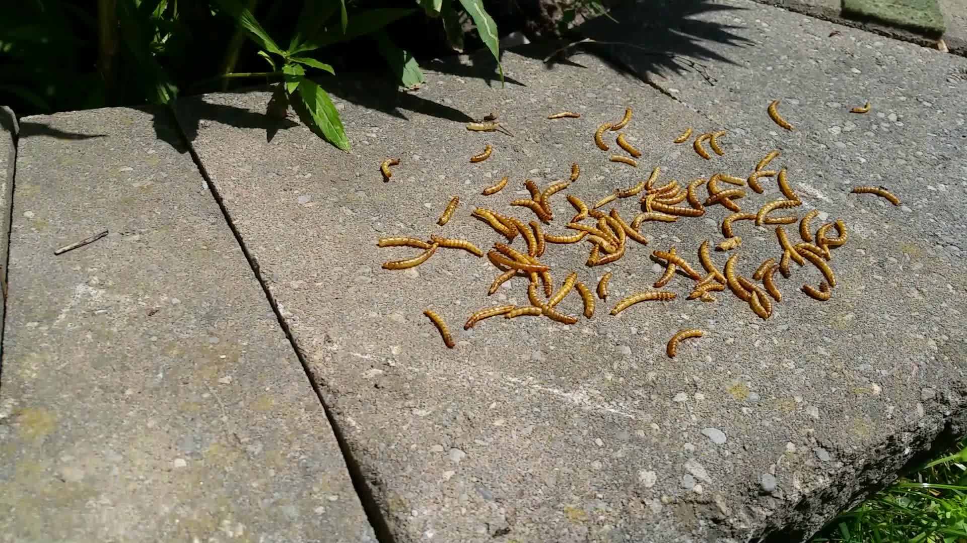 BACK OFF, GET YOUR OWN MEALWORM GIFs
