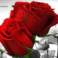 Watch and share Botão De Rosas Vermelhas GIFs on Gfycat