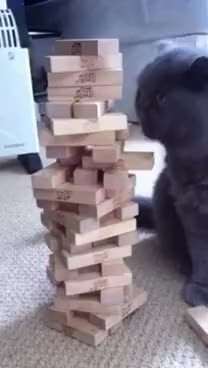 Watch Playing Jenga GIF on Gfycat. Discover more cat GIFs on Gfycat