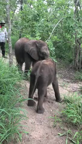 AnimalVideo, Conservation, HESC, SouthAfrica, Wildlifeconservation, baby elephants, cute animals, cutest elephant video, elephant conservation, sweetest elephant videos, Orphaned elephants, Mopane and Raekie enjoying the green foliage of summer GIFs