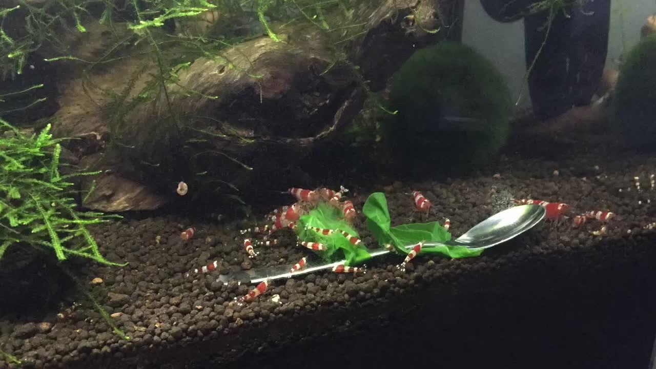 shrimptank, Shrimp Timelapse GIFs