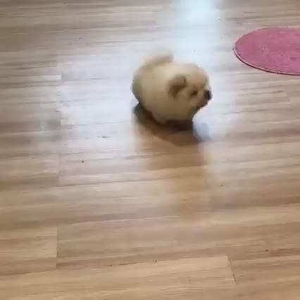 Watch and share Awwwww GIFs and Puppy GIFs by Hanna on Gfycat