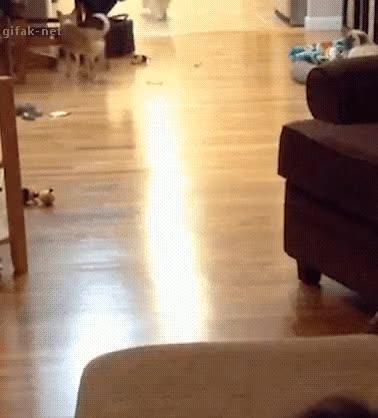 Watch and share Sofa Dog GIFs on Gfycat