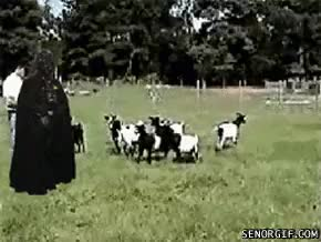 Watch and share Funny Animal Gifs Darth Vader Vs Goats GIFs on Gfycat