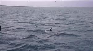 Watch and share Niagara Falls GIFs and Marine Life GIFs on Gfycat