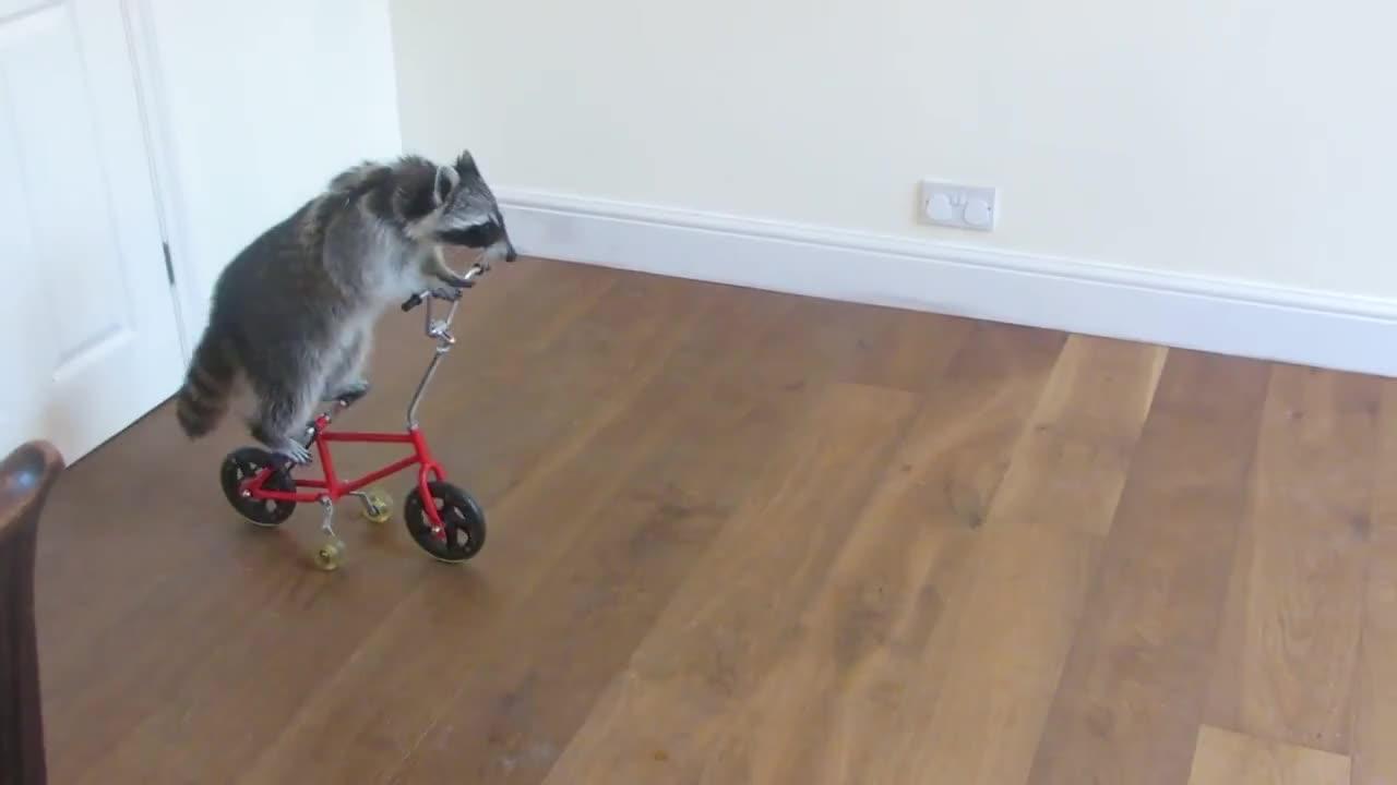 Melanie Raccoon Riding Bike-side Angle GIF