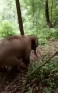 animal, animals, elephant, elephants, Elephant Having Fun GIFs