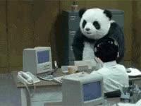 Watch and share Panda GIFs on Gfycat