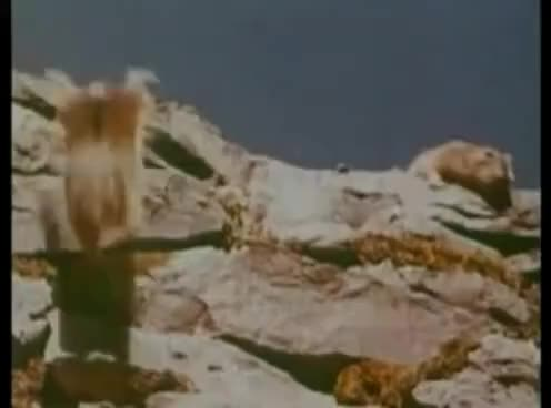 Watch and share Lemmings GIFs on Gfycat