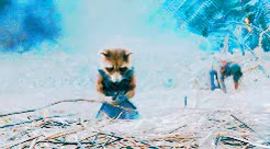 Watch and share Rocket Raccoon GIFs and Peter Quill GIFs on Gfycat