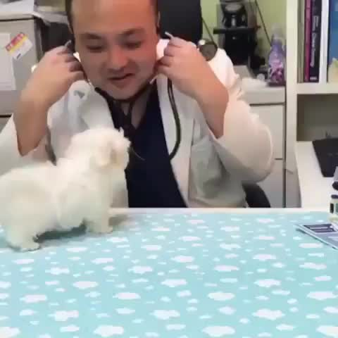 Tiny dogtors appointment GIFs