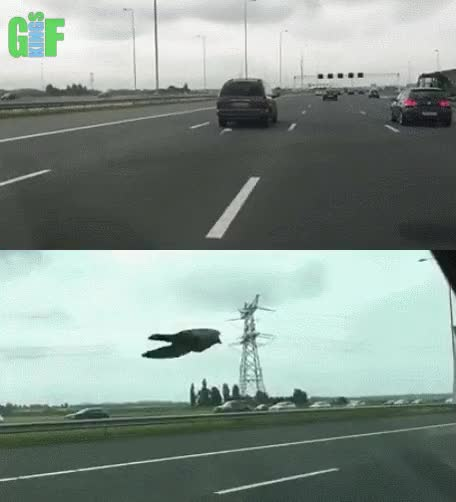 Watch and share Motorway GIFs and Bird GIFs by Gifkings on Gfycat