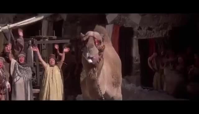 Watch and share Conan And The Camel GIFs on Gfycat