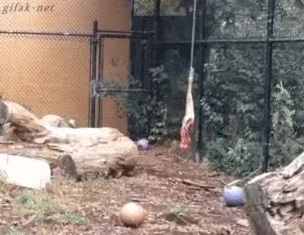 Watch and share Animals GIFs and Awesome GIFs by arrogantamb on Gfycat