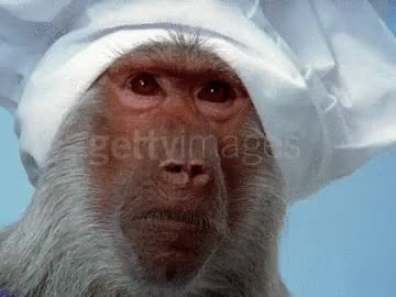 Watch and share Monkey Chef GIFs on Gfycat