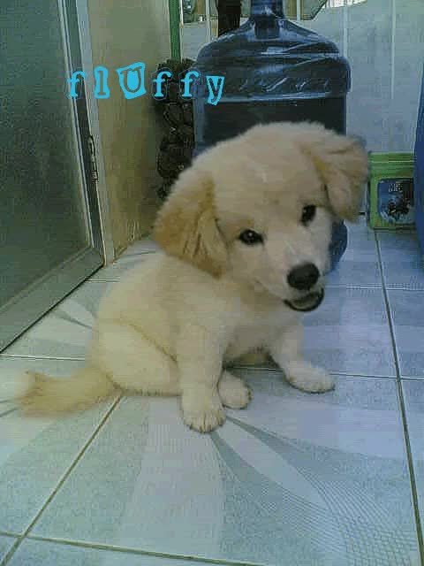 Watch and share Fluff GIFs on Gfycat
