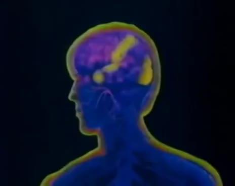 Watch and share Sistema Nervioso Humano_Como Funciona GIFs on Gfycat
