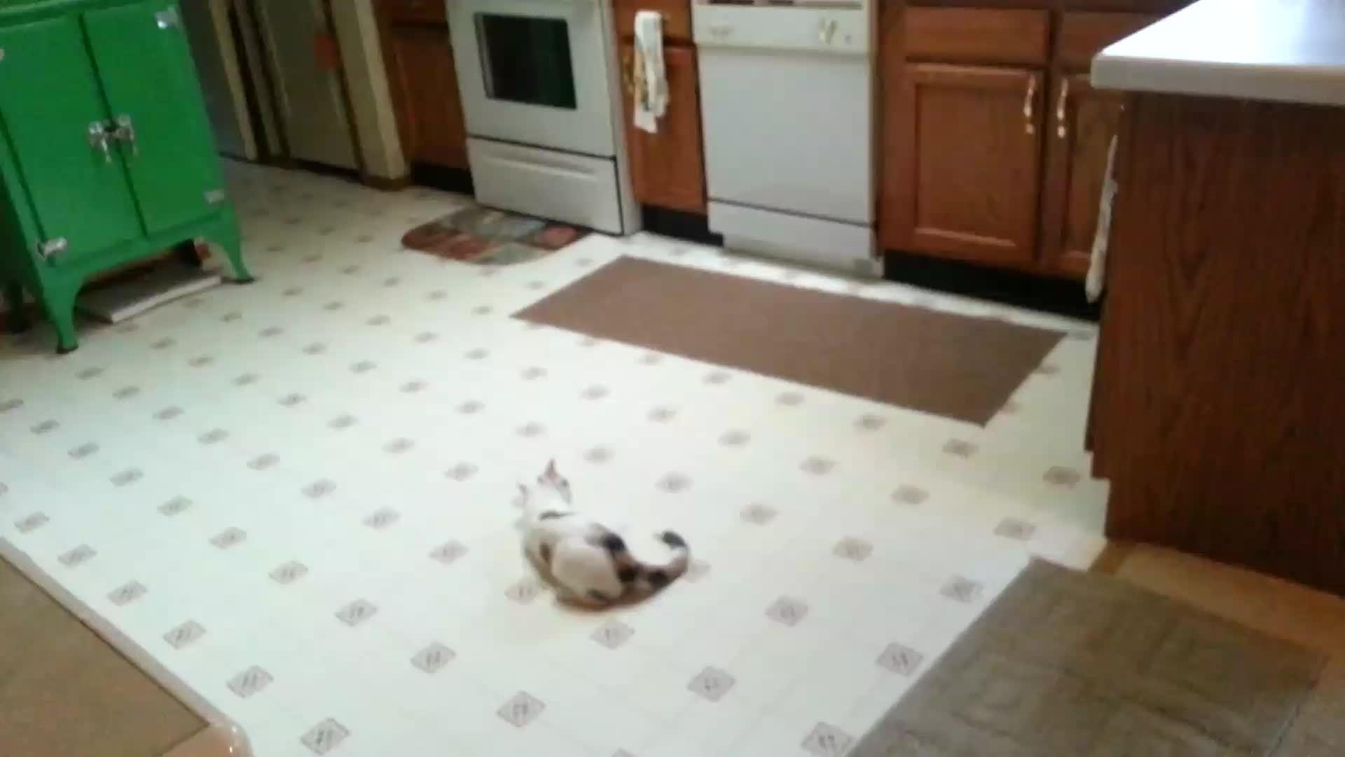 animalsbeingderps, cat, derp, Cat vs String GIFs
