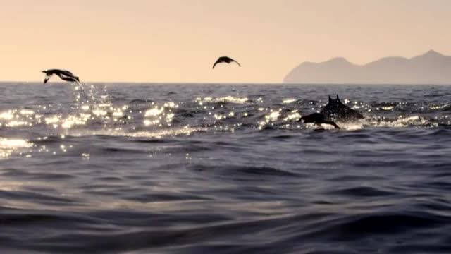Watch and share Mobula Ray GIFs and Nature GIFs by quaintmushroome on Gfycat