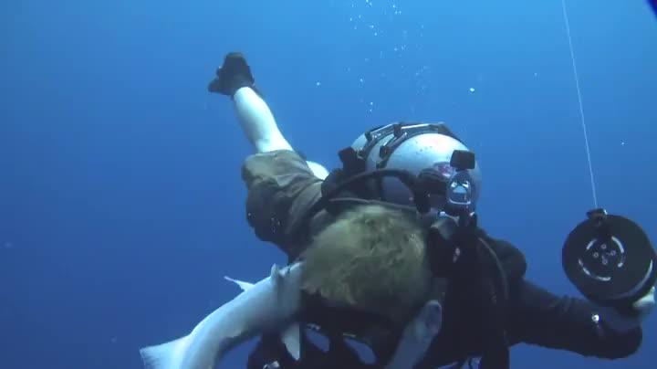 diver, fish, scuba, Diver GIFs