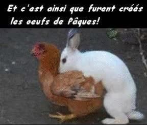 Watch and share Et C'est Ainsi Que Furent Créer Les Oeufs De Pâques GIFs on Gfycat