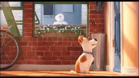 gifs, movies, wowcomics, The Secret Life Of Pets GIFs
