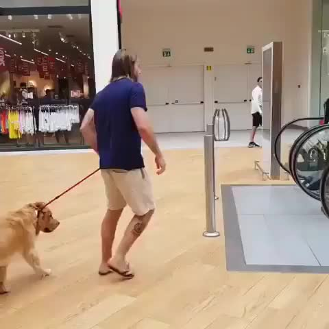 Watch and share Dog Escalator GIFs on Gfycat