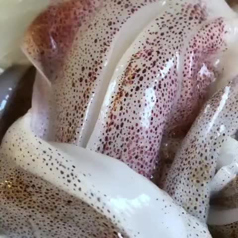 calamari, chromatophores, fishingvictoria, portphillipbay, squid, squidfacts, victoriaaustralia, victorian fisheries authority, Have you ever seen a squid's chromatophores firing? This is what they look like up close 🦑 ... Chromatophores are pigment and light-reflect GIFs