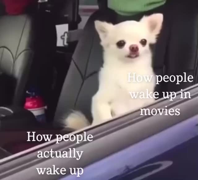 Watch and share Chihuahuas GIFs and Wake Up GIFs by Indecisive on Gfycat