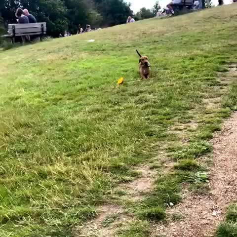 Watch In the park, got my flower... Gonna find da ladies!! 🌻😎#romanceisnotdead ⁣ ⁣ ⁣ ⁣ ⁣ ⁣ ⁣ ⁣ ⁣ ⁣ ⁣ ⁣ ⁣ ⁣ ⁣ ⁣ ⁣ ⁣ ⁣ GIF by @sezar4321 on Gfycat. Discover more bassoti, boscoandhisbigstick, dachshund, dachshundoftheday, dachshundpuppy, dachshundsofinstagram, dackel, doggo, doxie, doxiecentral, featuremydoxie, kingofthesticks⁣, sausagedog, sausagedogcentral, sausagedoglife, standarddachshund, teckel, weenie, wienerdog, wienerdoglove GIFs on Gfycat