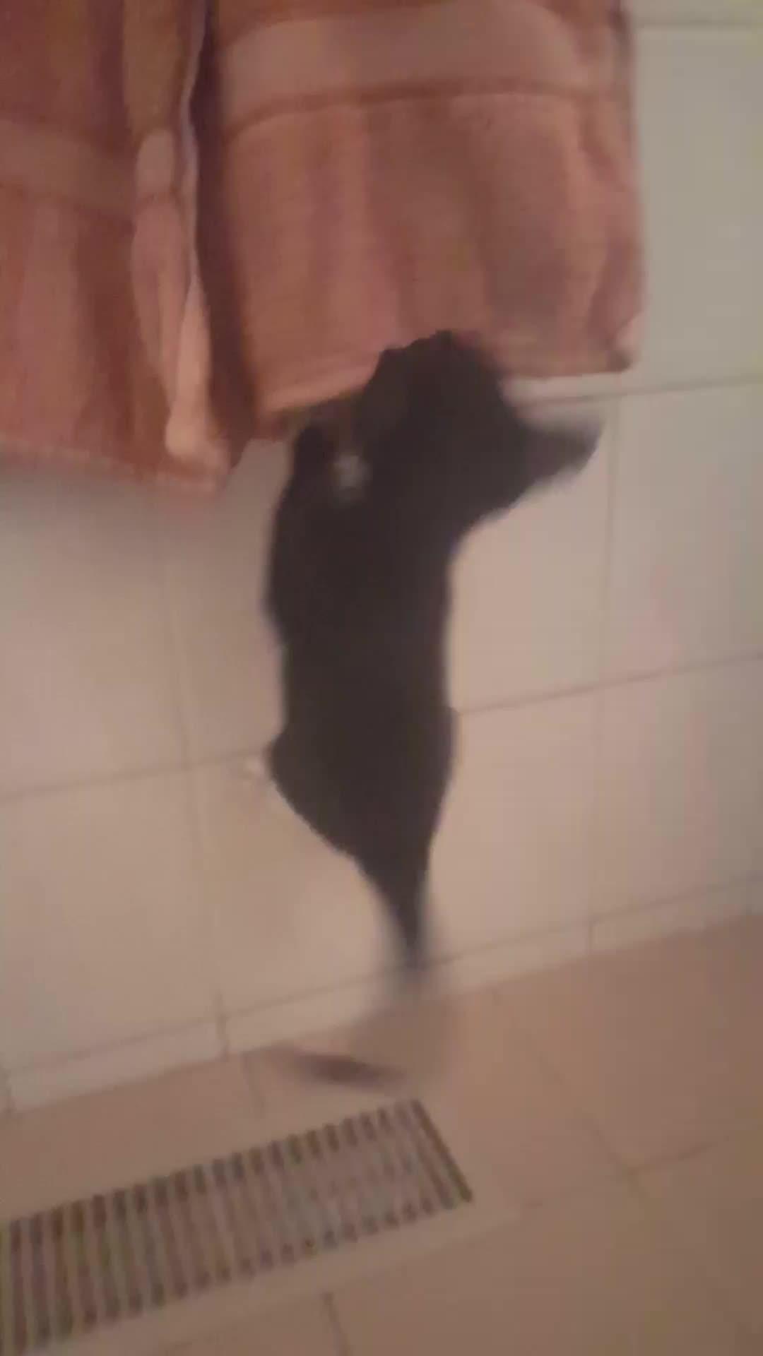 AnimalsBeingJerks, kittengifs, animalsbeingjerks GIFs