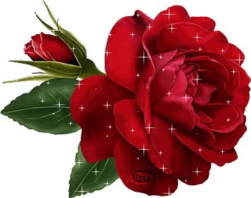 Watch roses GIF on Gfycat. Discover more related GIFs on Gfycat
