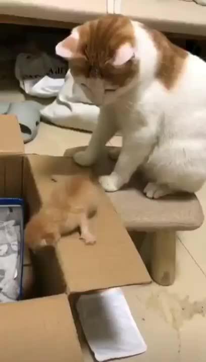 cat, kitten,  GIFs