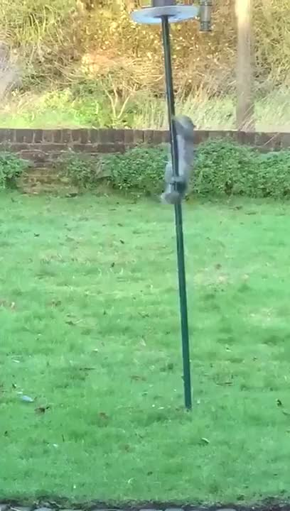 Watch and share Squirrel GIFs on Gfycat