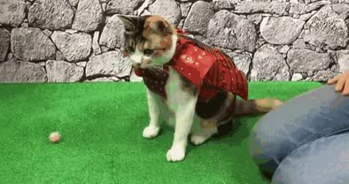 Watch and share Samurai GIFs and Cat GIFs by Vinegret on Gfycat